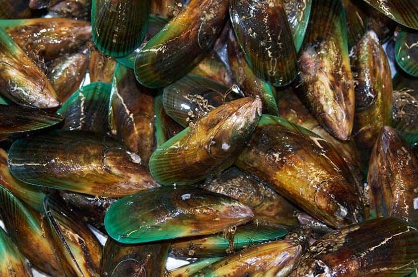 Grünlippige Muscheln sind reich an B-Vitaminen