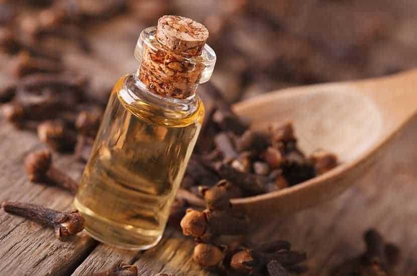 Nelkenöl hat antimikrobielle und schmerzstillende Eigenschaften