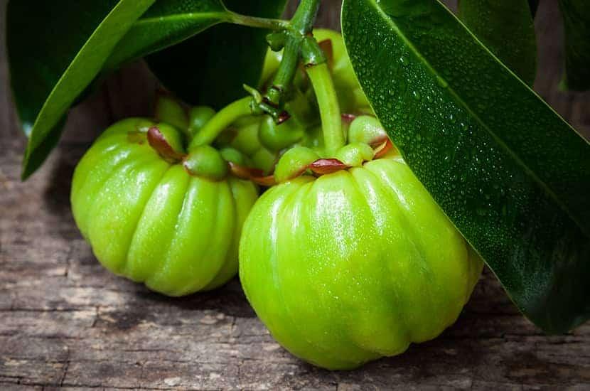 Garcinia cambogia enthält Verbindungen, die die Gewichtsabnahme stimulieren können.