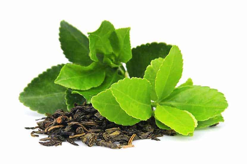 Unfermentierte grüne Teeblätter sind reich an Antioxidantien