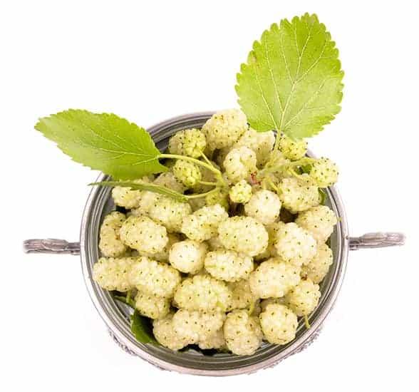 Weißer Maulbeerextrakt ist reich an Vitaminen, Mineralien und Antioxidantien